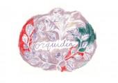 orquideaの写真